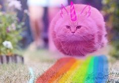 Pink fluffy kity cat dancing on rainbows by ArtemisDragonheart
