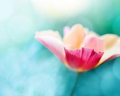 flower photography teal botanical photography nature 8x10 fine art photography floral spring photography pastel peach pink bedroom decor on Etsy, $25.00