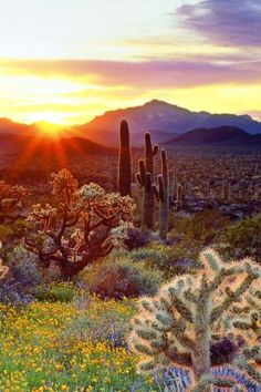 Wallpaper Cacti at sunset - Photos and Free Walls
