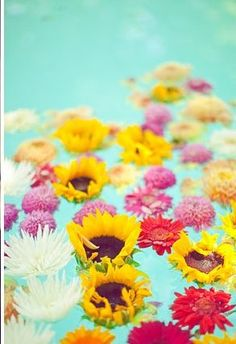 for pond colorful floating flowers use pool noodle cut up to put flowers in so they will float