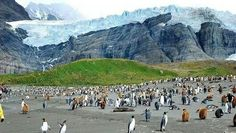 Penguins on a remote Antarctic island