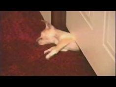 Puppy Escape Artist Finally Reveals His Secrets - BarkPost