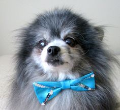 Formal Dog Bow Tie  Perfect Male Dog's by BloomingtailsDogDuds, $8.95