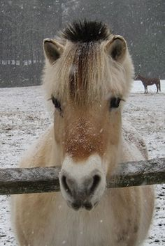 2014 Officers/Committees - Northeast Fjord Horse Association