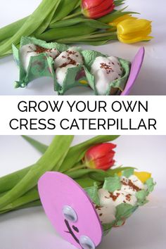 Simple craft for toddlers that will then grow to create a caterpillar ideal for spring, bugs or growing themed fun. It's so simple even toddlers can make it and watch the seeds grow