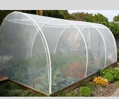 This enclosure is covered with Vege net. this Net also keeps out fruit fly.