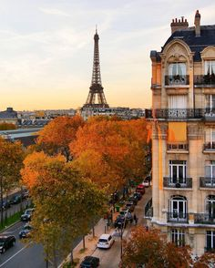 this photo captures the warmth that autumn brings, especially in a place as beautiful as paris