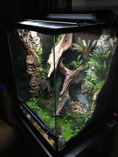 Newest Free of Charge Reptile Terrarium setup Suggestions There's no doubt which developing a puppy will bring uncounted pleasure in order to a persons life. Terrariums Gecko, Lizard Terrarium, Garden Terrarium, Chameleon Terrarium, Crested Gecko Vivarium, Crested Gecko Habitat, Reptile Habitat, Reptile Room, Reptile Pets