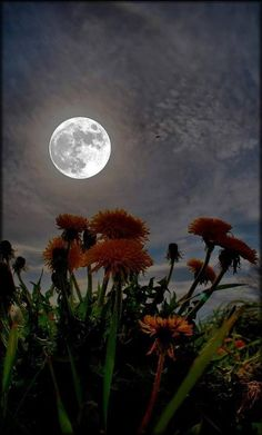 The moon looks upon many night flowers; the night flowers see but one moon. - Jean Ingelow Wishing you sweet dreams and moon beams. Remember to love one another and to always be kind. Sun Moon, Stars And Moon, Thomas Carlyle, Persona Feliz, Shoot The Moon, Look At The Moon, Midnight Garden, Midnight Sun, Image Nature
