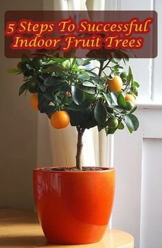 5 Steps To Successful Indoor Fruit Trees #gardening #indoorgardening