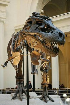 T. rex. rrrrrrrrrruuufffffffffff !