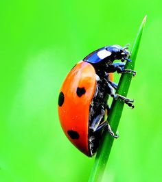 Ladybug. by Eivind von Moos, via 500px