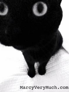 MarcyVeryMuch.com penelope kitten close up  #cats #blackcats