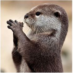 Prayers for help keeping the Earth safe for our Animal Friends.