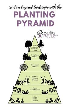 Use the garden pyramid to plan your garden beds. The garden pyramid gives you th… Sponsored Sponsored Use the garden pyramid to plan your garden beds. The garden pyramid gives you the right plant ratios to achieve a layered garden… Continue Reading → Planting Shrubs, Planting Flowers, Flower Gardening, Permaculture Design, Perennial Garden Plans, Flower Garden Plans, Purple Door, Landscape Design Plans, Landscape Architecture