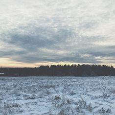 land field woods forest winter