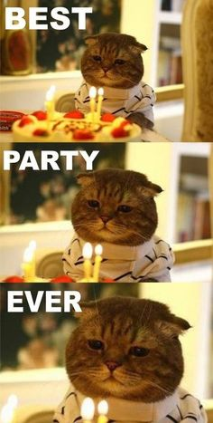 Best. Party. Ever.