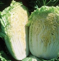 Explore our assortment of Chinese cabbage varieties (including Napa types). Our Chinese cabbage seeds are guaranteed seed. Spring Garden, Lawn And Garden, Types Of Cabbage, Cabbage Seeds, Seed Packaging, Chinese Cabbage, Organic Seeds, Garden Seeds, All Flowers