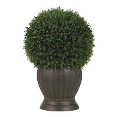 Both delicate and stately, this beautiful Ceder Ball Topiary adds a subtle beauty to any area it adorns. The 369 leaves spread out into an almost perfect circle (just like nature intended) and add a touch of soft elegance to your décor. Nestled into a decorative vase, this handsome specimen stands 14 inches high, and best of all, will keep its good looks for years and years, with nary a drop of water.