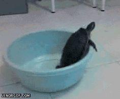 turtle-fail.gif