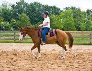 Sonny and I Horses, Animals, Animales, Animaux, Animal, Animais, Horse