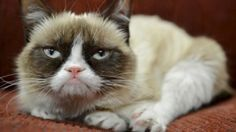 Q:What is the grumpy cat's name? A: Tardar Sauce (born April Commonly known as Grumpy Cat, is an American Meme Grumpy Cat, Grumpy Cat Quotes, Cat Memes, Memes Humor, Funny Memes, Grumpy Kitty, Funny Quotes, Grump Cat, Hilarious Jokes