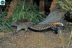 Australian Birds, Beautiful Birds, Paradise, Colorful, Facebook, Red, Animals, Animales, Animaux