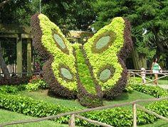Espléndida Mariposa