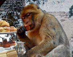 monkey tea party