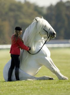 #Dressage english horse and #rider sit