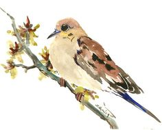 Mouring Dove one of a kind original watercolor painting, bird art, sage brown colors small original painting gift bird lover