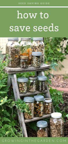 Garden Seeds, Planting Seeds, Garden Plants, Gardening For Beginners, Gardening Tips, Gardening Books, Diy Interior, Seed Bank, Vegetable Garden Design