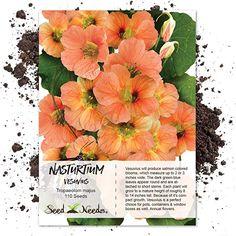 110 Seeds Non-GMO Jewel Mix Nasturtium Tropaeolum nanum Seed Needs