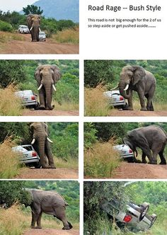Road Rage in bush African Culture, African History, All About Africa, South Africa Safari, Road Rage, Game Reserve, African Safari, Landscape Photography, Places To Go