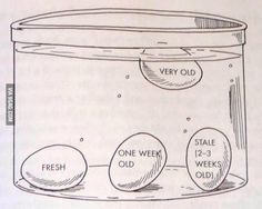 How to test the age of an egg.