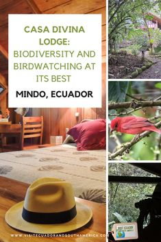 Casa Divina Lodge is family-run business offering elegant and comfortable accommodation in Mindo. At a perfect location to enjoy birdwatching. Mindo Ecuador, South America, Latin America, Best Travel Sites, Spanish Speaking Countries, Travel Dating, Sustainable Tourism, Just Dream, Galapagos Islands