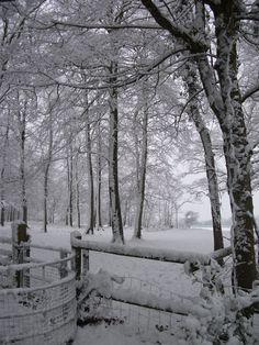 Snowy field in Somerset