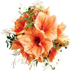 """Brides.com: Wedding Bouquets for All Budgets. $175 Wedding Bouquet. """"A big statement bloom creates a ton of impact, and peachy amaryllises couldn't be more beautiful—plus, they're not super-expensive.""""   Wedding bouquet of amaryllises and angel and jasmine vines by Nicolette Camille Floral Design Browse more orange wedding bouquets."""