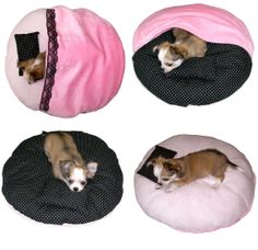 This is bed for dog. It is our product.