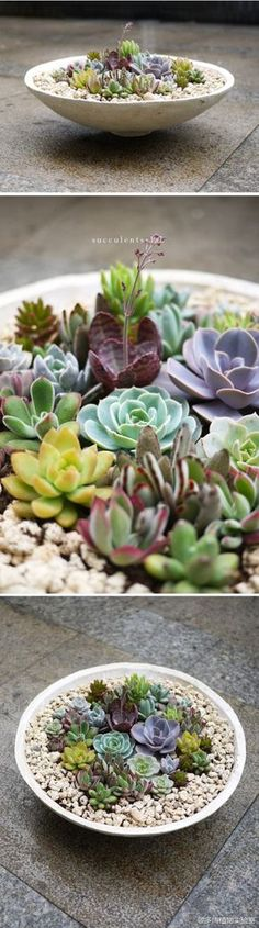 Variety of succulents in a dish garden- outdoor centerpiece idea FOR YOU BRANDI