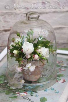 white roses under Bell Jar