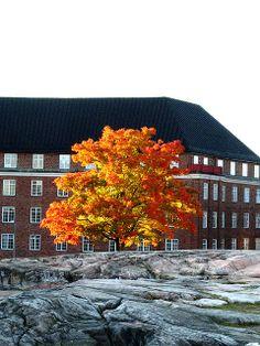 Orange Tree  Standing on top of the Rock Church
