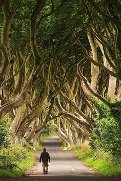 Dark Hedges, Northern #Ireland Soooo BEAUTIFUL makes me want to cry!