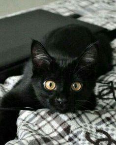 Wide-eyed amazement! Something has surprised him.
