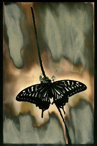 Chromoskedasic photograph - butterfly 2 Similar to Chemigram process Double Exposure Photography, Levitation Photography, Water Photography, Abstract Photography, Macro Photography, Film Photography, Photo Processing, Experimental Photography, Photo Work