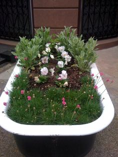 Here's an old bathtub turned container garden from a brownstone stoop just down the street from my apartment. It seems to be planted with armeria maritima -- one of my favorite plants in our roof garden -- in the front, along with some pale pink pansys. Garden Art, Outdoor Gardens, Container Gardening, Spice Garden, Creative Gardening, Garden, Horticulture Therapy, Garden Bathtub, Plants