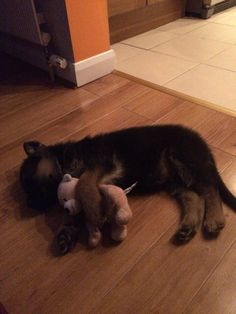 Toby loves his teddy.