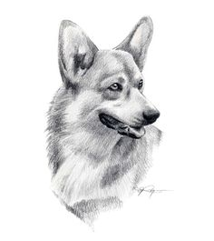 Bilderesultat for corgi puppy drawing