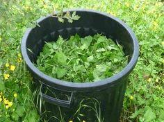 Aquaponics System For You Vegetable Garden, Plants, Growing Organic Vegetables, Organic Gardening, Hydroponic Farming, Gardening Supplies, Grow Organic, Organic Vegetable Garden, Natural Garden