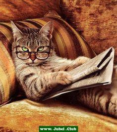 Kann man nicht mal in Ruhe lesen?